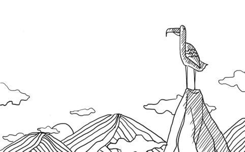 bird & mountain