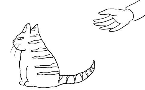 20201206 cat