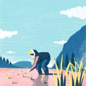 田植え / Rice planting