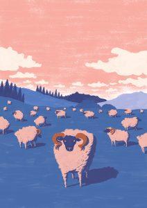 a250_sheep
