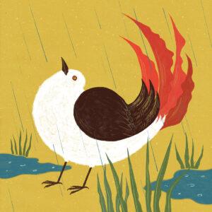 Red tail bird